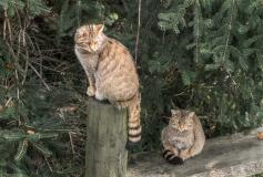 Wildpark_Feldkrich_Haemmerle_Ingrid-10-von-16