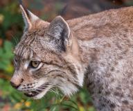 Wildpark_Feldkrich_Haemmerle_Ingrid-16-von-16