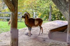 Wildpark_Schuler_Christine_2020-1