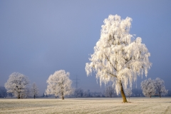 Morgenfrost (2)