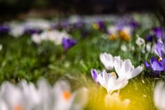 Blütenwiese_RemoStechert_LK1024