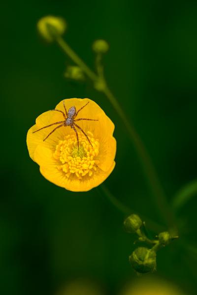 0037_Kleine-Spinne-ganz-gross_Antje_Stechert