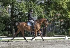 Pferdetag-1-von-13