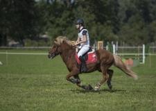 Pferdetag-13-von-13