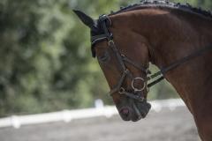 Pferdetag-2-von-13
