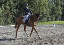 Pferdetag-4-von-13