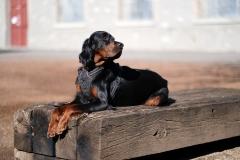Fotoshooting_Hunde_Inatura-25