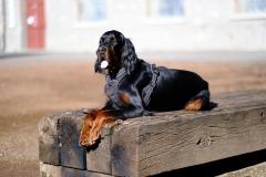 Fotoshooting_Hunde_Inatura-26