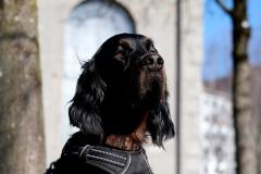 Fotoshooting_Hunde_Inatura-28
