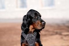 Fotoshooting_Hunde_Inatura-30