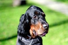 Fotoshooting_Hunde_Inatura-31