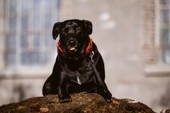Fotoshooting_Hunde_Inatura-32