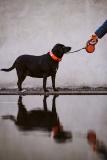 Fotoshooting_Hunde_Inatura-35