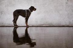 Fotoshooting_Hunde_Inatura-36