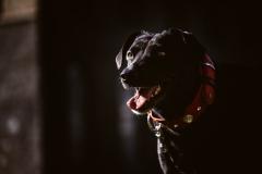 Fotoshooting_Hunde_Inatura-37