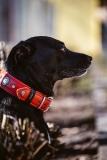 Fotoshooting_Hunde_Inatura-38