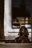 Fotoshooting_Hunde_Inatura-40