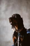 Fotoshooting_Hunde_Inatura-42