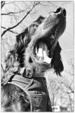 Fotoshooting_Hunde_Inatura-43
