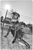 Fotoshooting_Hunde_Inatura-44