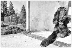 Fotoshooting_Hunde_Inatura-46
